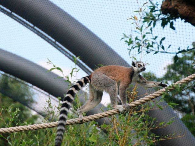 Opel-Zoo GWS